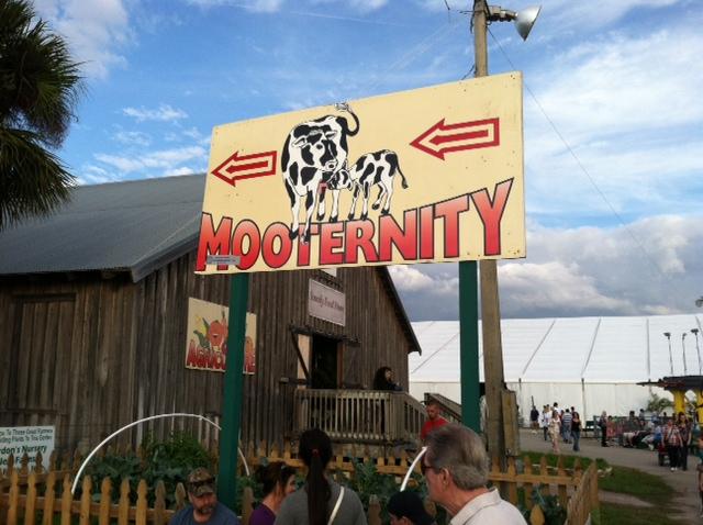 Mooternity