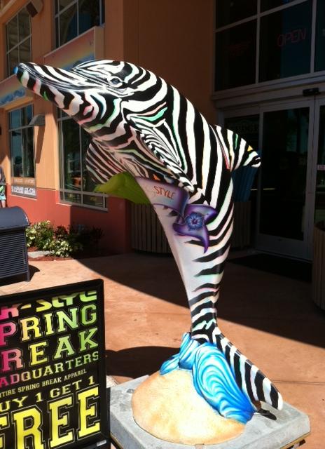Dolphin Zebra