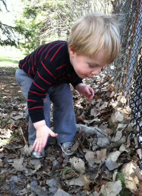 Park - Ehtan in Leaves