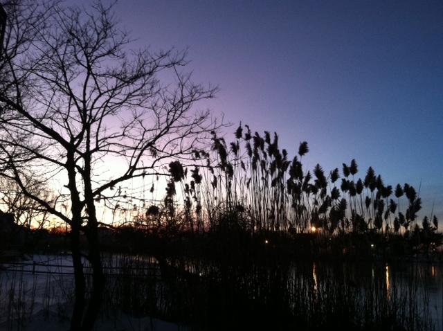 post sunset reeds