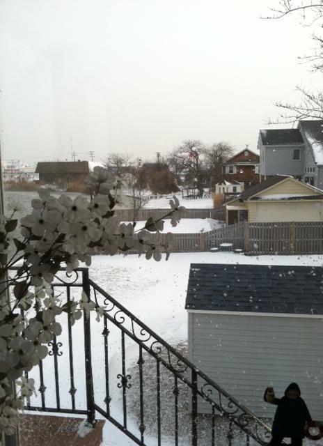Snow Neighbor