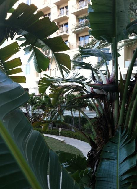 sp palms
