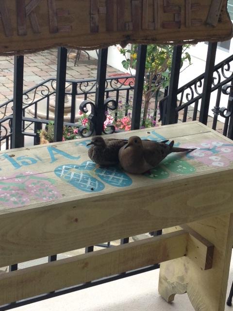 Bird Bench