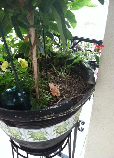 Bird - empty nest