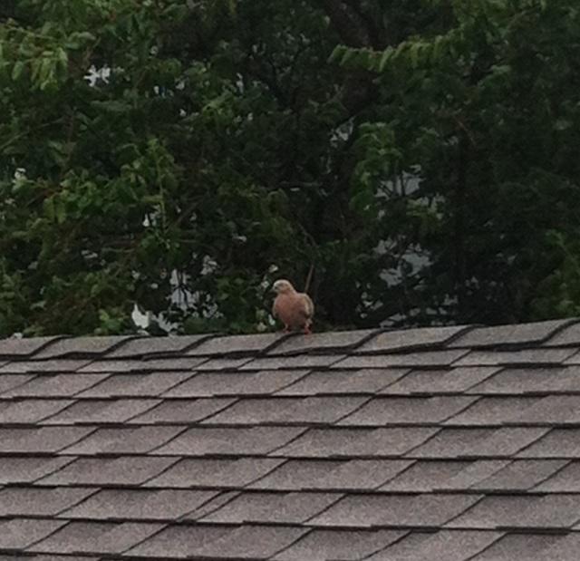 Bird momma vigilant