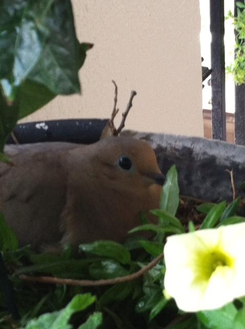 Bird on Eggs