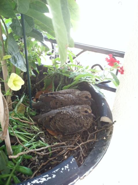 Birds Growing