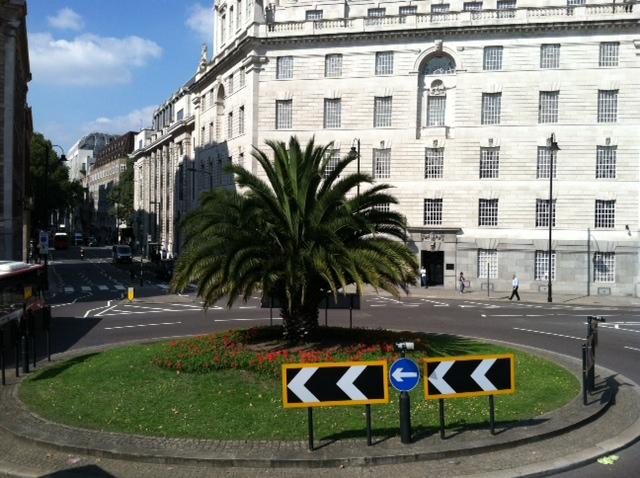 England - Palm Tree