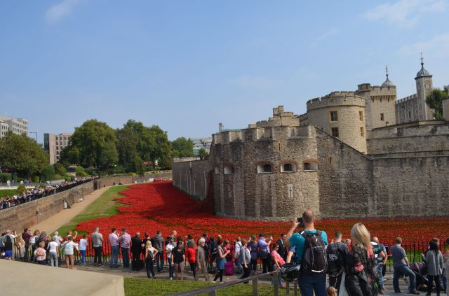London Tower Red Poppies
