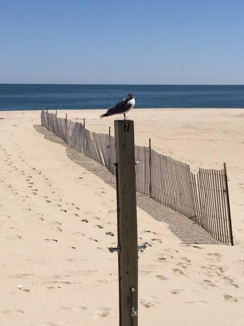 PPB - Gull Stand
